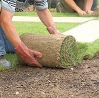 Actualités de votre jardinier paysagiste à Fréjus